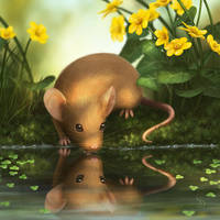 Water Mouse