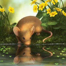 Water Mouse by love--or--death
