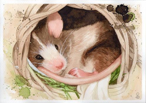 Nelson (Watercolor)