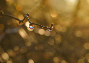 Dew In Srping by LiliaLaurent