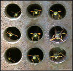 9 Wasp Guardian by Superflight