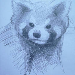 Sketch day: Red Panda by ryokenohkie
