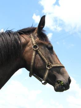 Horse 0.5