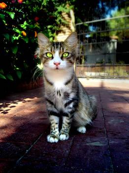 Colour cat
