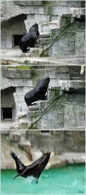 Jumping seal