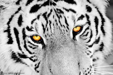 tiger wall 1