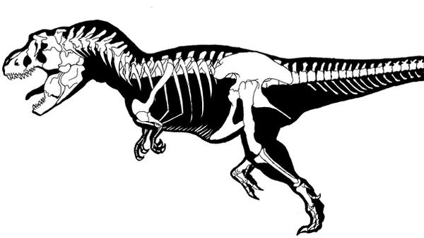 TRex Skeleton by FullmetalDevil on DeviantArt