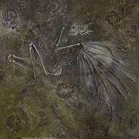 Fairy Fossil