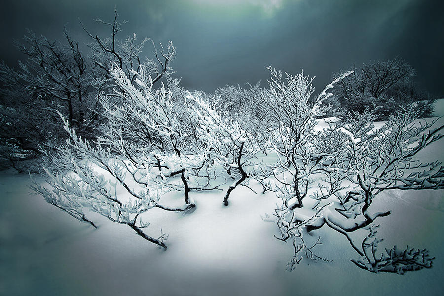 Winter Dream by JPGphotos