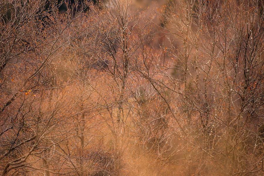 Reve d'automne by JPGphotos
