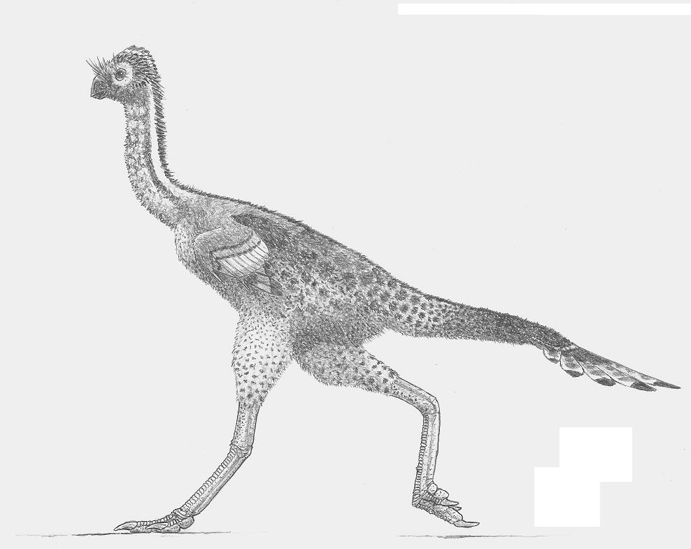 Avimimus portentosus by ZEGH8578