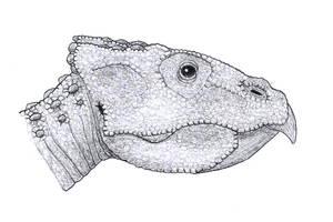 Magnirostris dodsoni