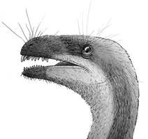 Ornitholestes doodle