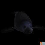 The Depth - Seal