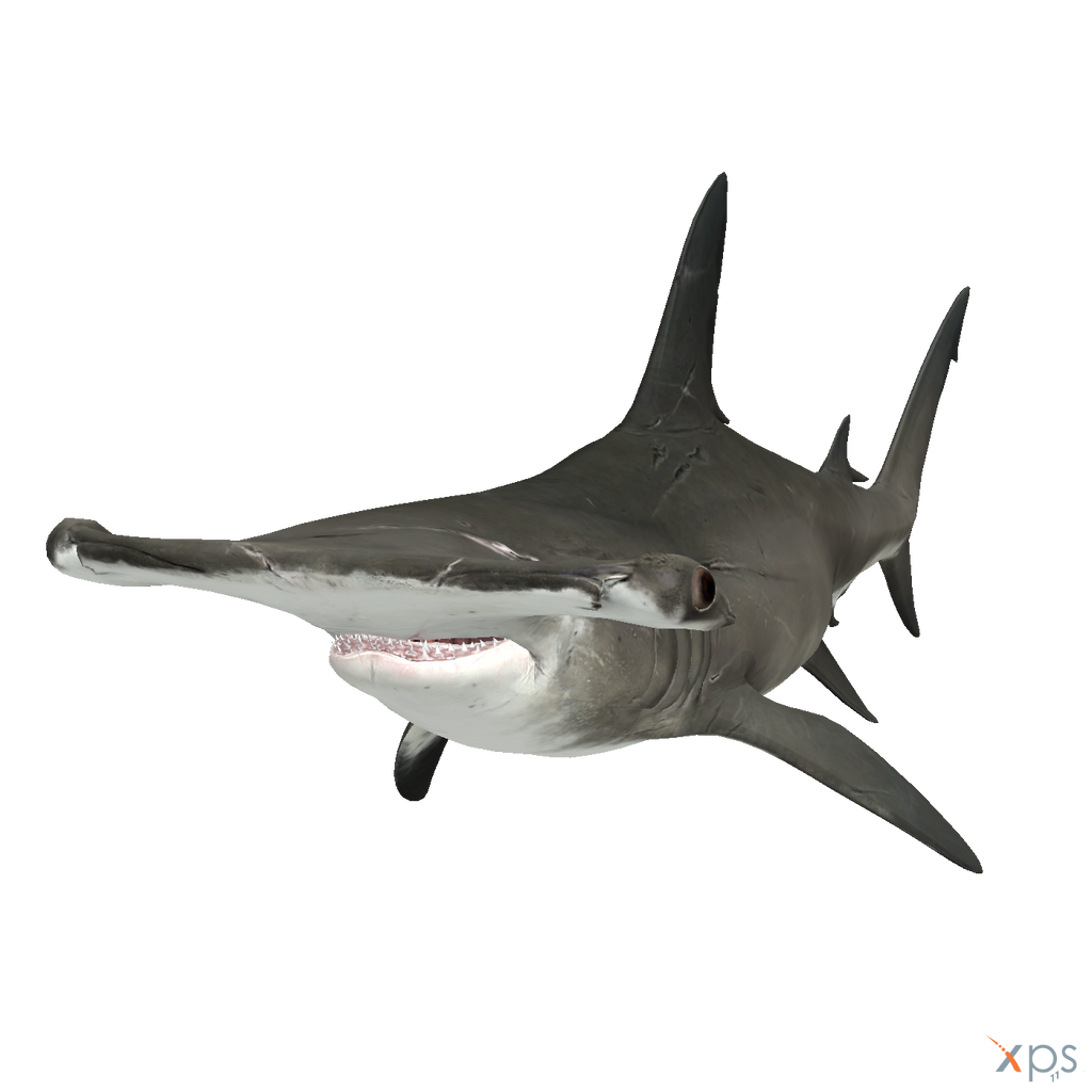 The Depth - HammerHead Shark by MrUncleBingo on DeviantArt