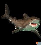 The Depth - Tiger Shark