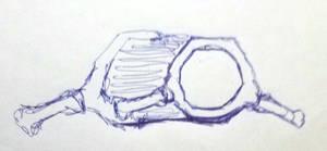 part of the ringoids skeleton