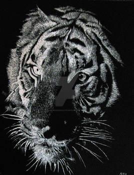 Scratchboard Tiger