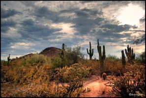 Stormy desert HDR