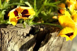 Summer flower...