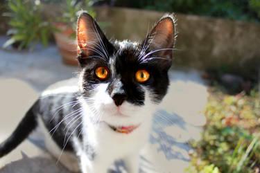 Cat eyes n_n