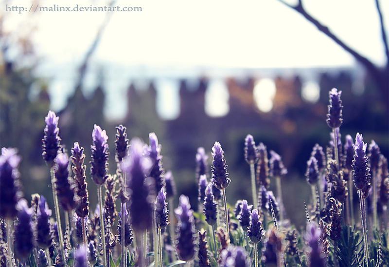 Purple by MaLinx