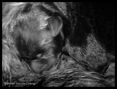 Newborn puppy by ETLC