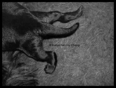 Newborn puppy 2 by ETLC