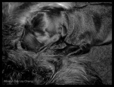 Newborn puppy 4 by ETLC