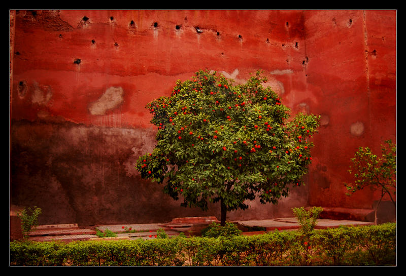 Gwezenn oranjez by Pebekanao