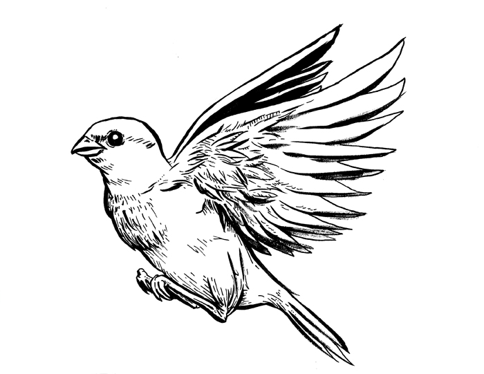 Simple sparrow drawings - photo#19