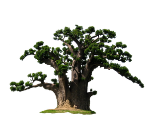 Baobab 04