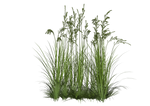 Grass6 Alegion-stock