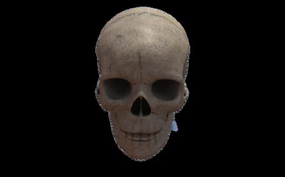 Crane  Skull  (9)