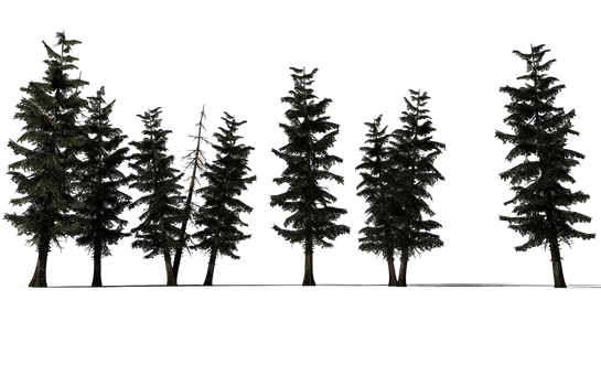 Super Sapins hd (1)