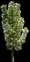 Tree News model  (5)