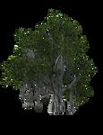 HD Tropical plant 01