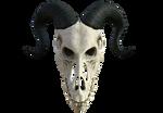 Dragon Skull 04