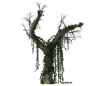 09 Element  Vegetal Souche 2