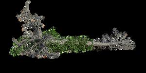 09 Element  Vegetal Souche