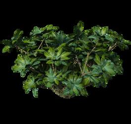 09 Vegetal  Plante 02