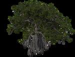 09 Vegetal Mangrove 04