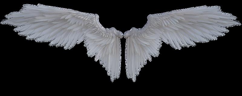 Angel's Wings  HD 032