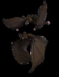 Bat 02