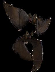 Bat 03