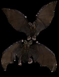 Bat 04