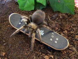 Tarantulas are nasty