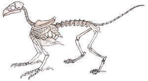 Gryphon Skeleton by RacieB