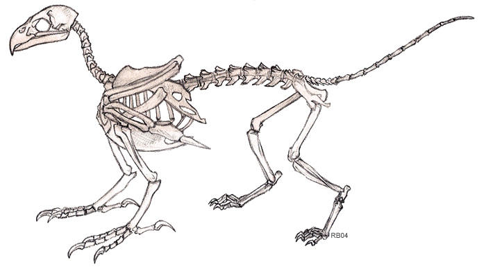 Gryphon Skeleton by RacieB