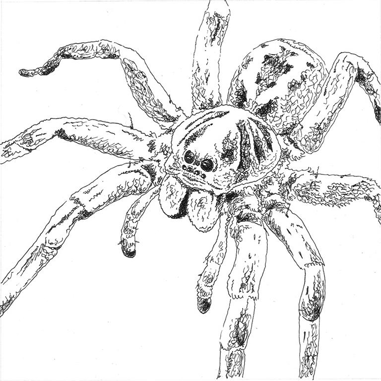 Scribble Method Drawing : Scribble spider by racieb on deviantart